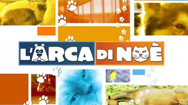 L'Arca di Noè, la nuova puntata: i consigli del veterinario sulle allergie dei nostri cani