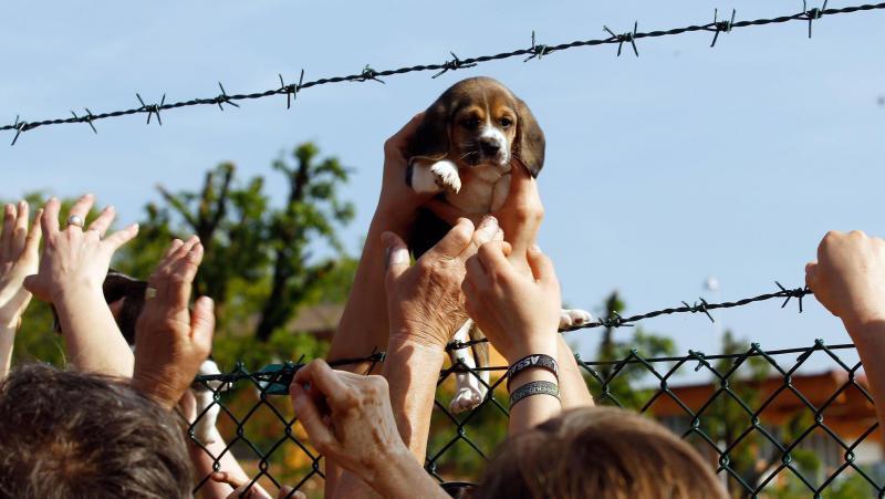 L'Arca di Noè, la nuova puntata: il raduno dei beagle a Verona, ad un anno dalla liberazione di Green Hill