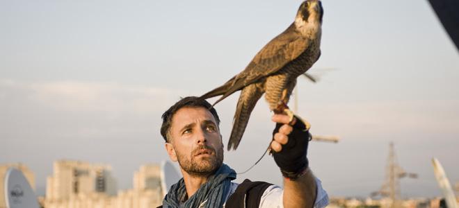 Ascolti Tv, 5 gennaio 2015: Ultimo – L'occhio del falco a 3,1 mln; Le avventure di Peter Pan a 2,9 mln