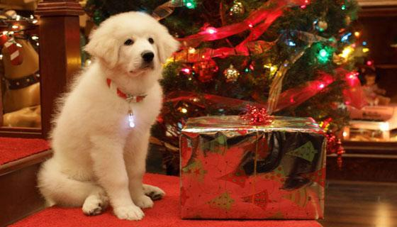Programmi Tv, stasera 19 dicembre: Il Dono, Lo Show dei Record, Zampa e la magia del Natale